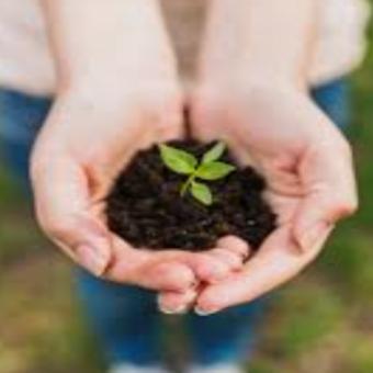 seedling, holding seedling in hand