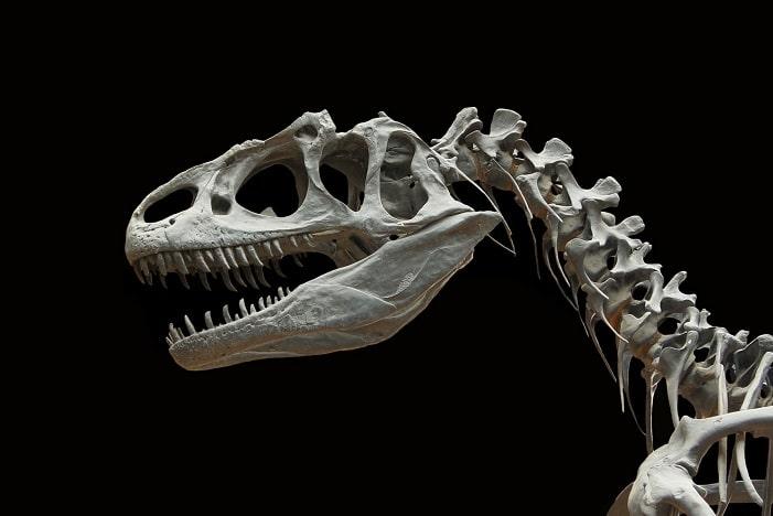 dinosaur stock image, dinosaur bones, fossil, STEM