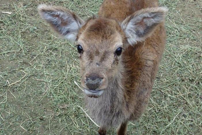 Lydell Deer Sanctuary, deer
