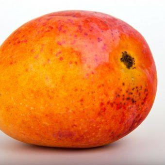 mango, mango fruit