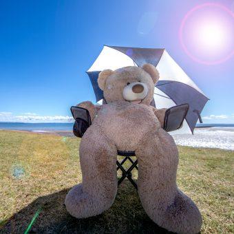 Teddy Bear by the sea