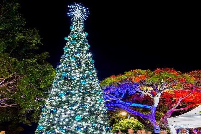 redlands tree light up
