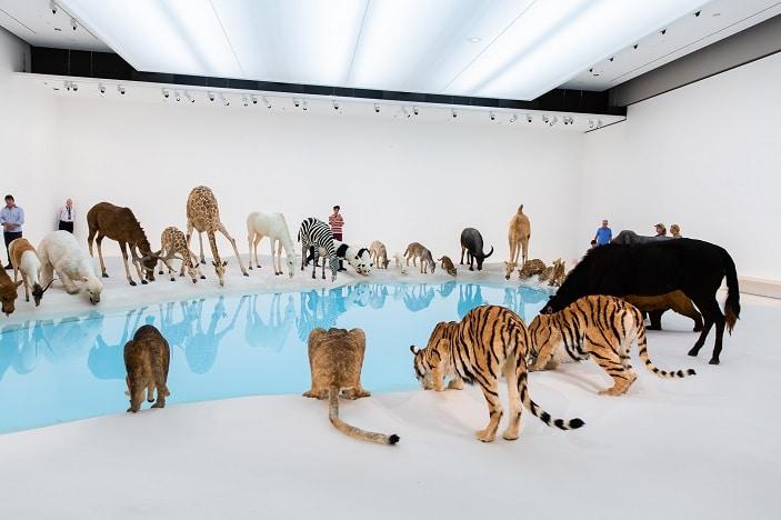 animal feeding waterhole goma