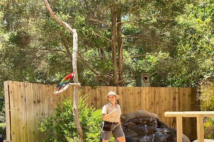 Bird Show at Currumbin Wildlife Sanctuary