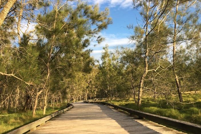 boondall wetlands walkway