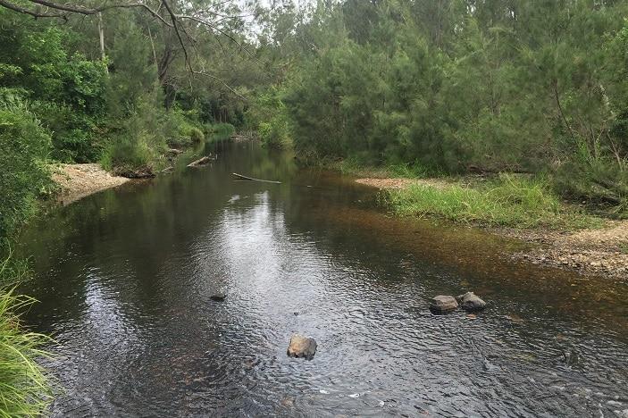 Bunya Riverside, Bunya Creek, Bushland Setting