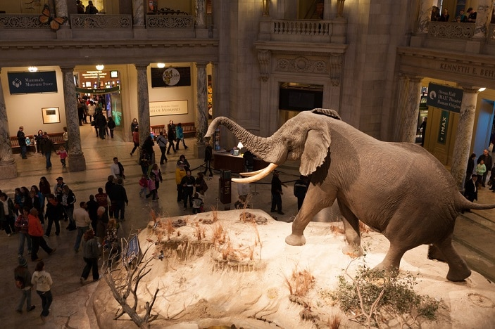 virtual tour natural museum