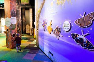 butterfly exhibit at karawatha nature centre