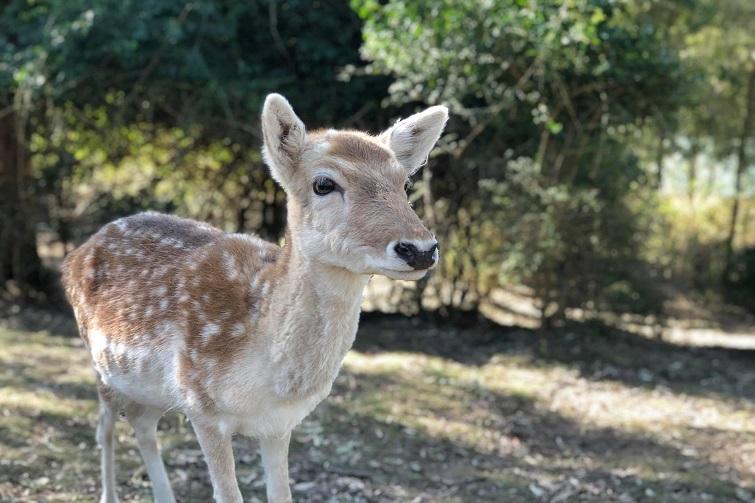 lyell deer sanctuary