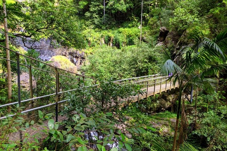 suspension bridge on Purling Brook Falls Circuit in Springbrook National Park