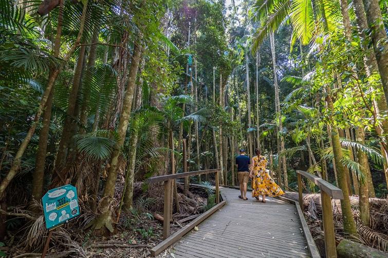 rainforest walk sunshine coast, mary cairncross scenic reserve
