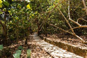 shaded walking trail
