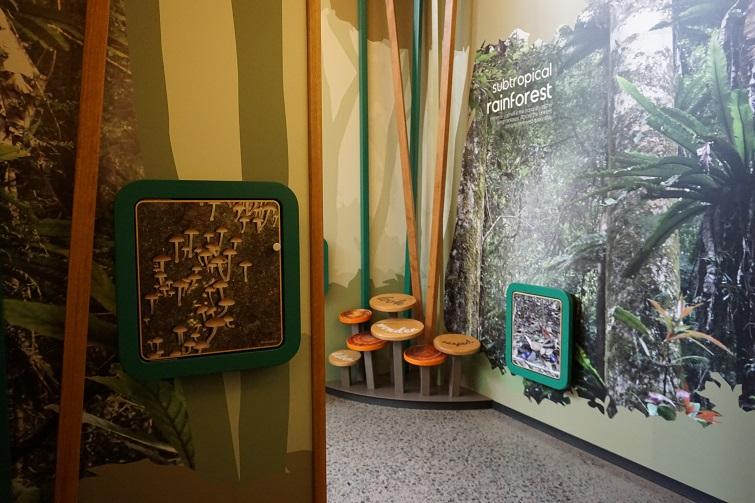 rainforest room mary cairncross scenic reserve