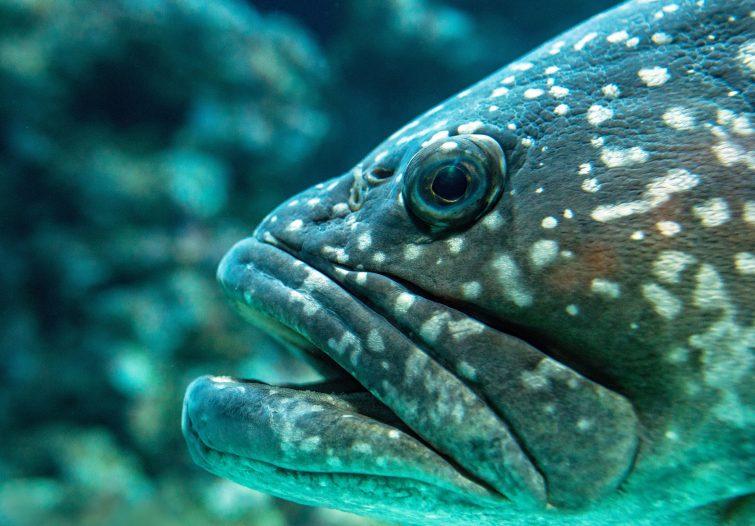 fish bribie island what lurks beneath