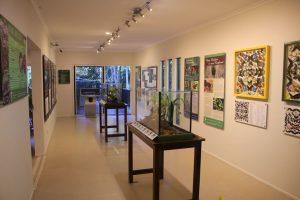Tamborine Rainforest Skywalk Rainforest Eco Gallery