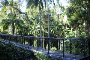 Tamborine Rainforest Skywalk wheelchair accessible walk