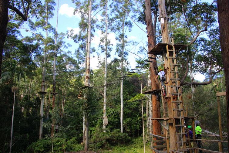 Thunderbird Park TreeTop Challenge climbing platforms