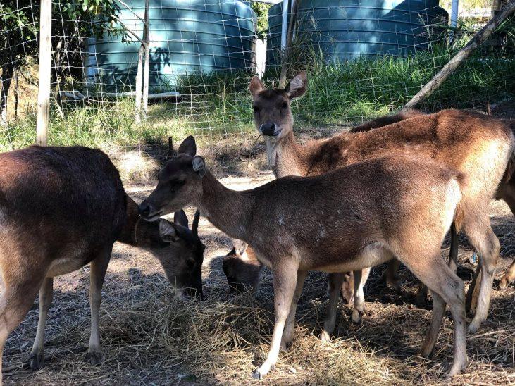 lyell deer park