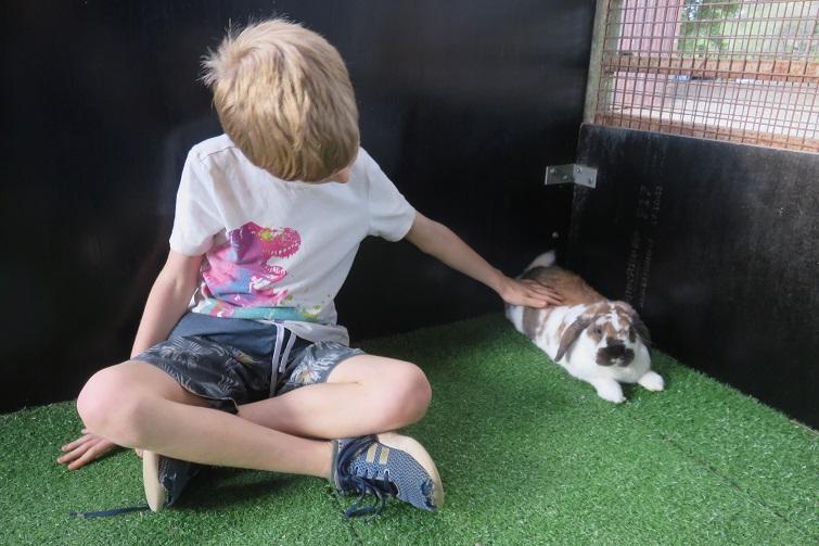 child patting guinea pig