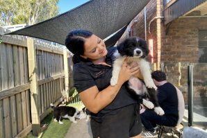 Employee of Collies & Co holding a border collie puppy