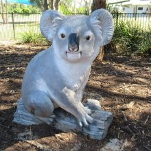 CREEC koala