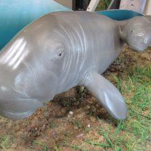 Osprey House dugong