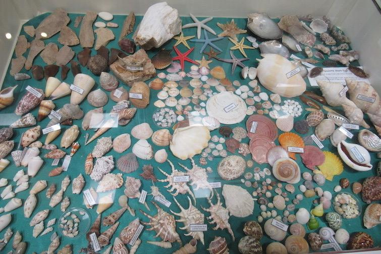 Osprey House shells