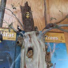 Osprey House tree