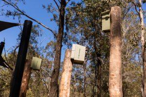 Warril Parkland nesting boxes