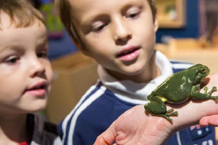 kids looking at a a green tree frog bush kindy