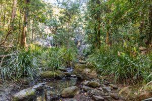 Cilento Park bushwalk creek view