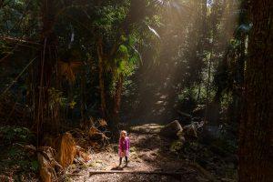 Cilento Park bushwalk path sunlight