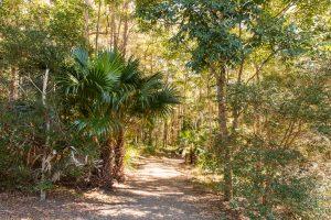 Cilento Park bushwalk path