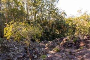 cilento park bushwalk view