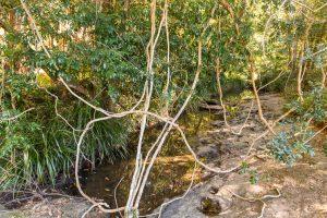 cilento park bushwalk creek