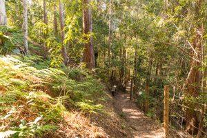 cilento park bushwalk path down