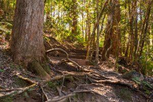 Cilento Park bushwalk path steps