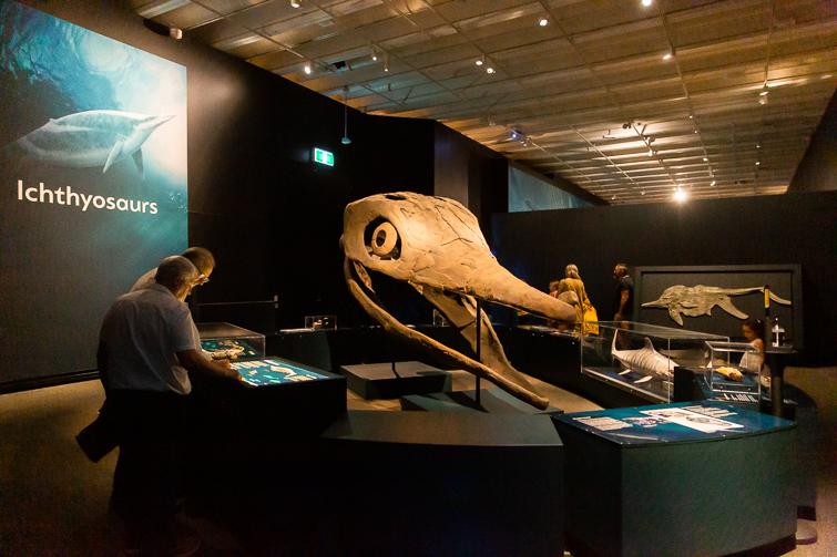 Ichthyosaurus skull