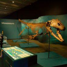 sea monster skeleton on display