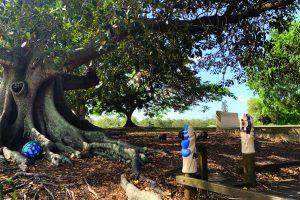 Big shady tree and totem