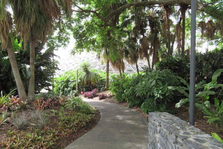 Botanic Gardens Mt Coot-tha Pathway