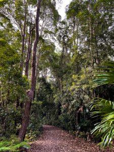 Buderim tramway walk through rainforest