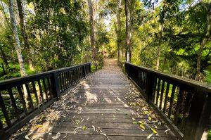 Buderim tramway walk bridge