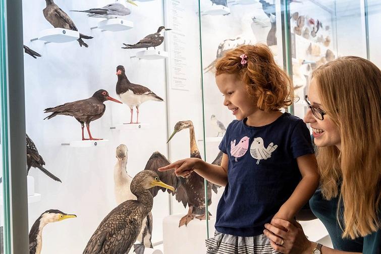 looking at birds Queensland museum