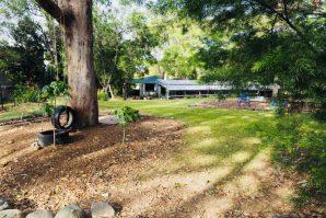 kindergarten outdoor setting under big tree
