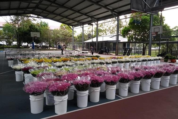 carina flower market