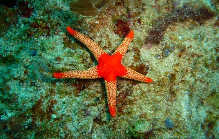 star fish ocean life
