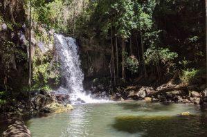 Waterfalls at Curtis Falls in Tamborine National Park