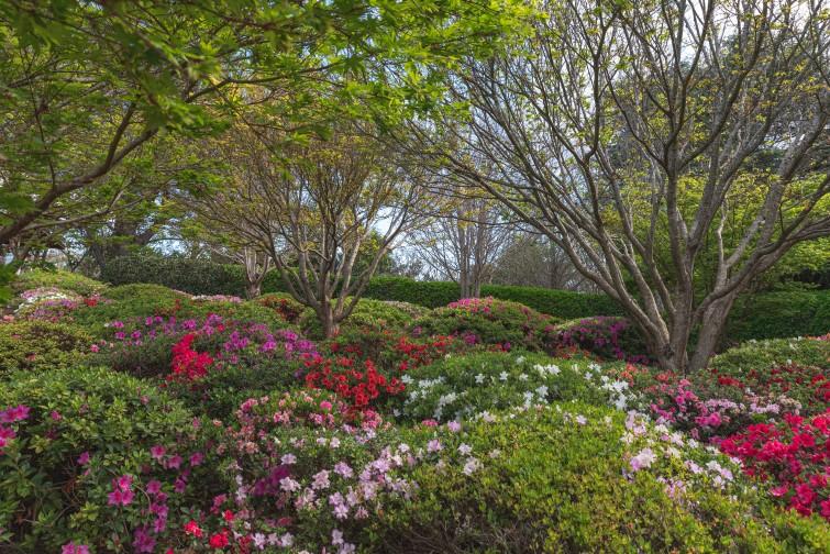 Flowers in Toowoomba Botanic Gardens