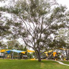 albert river park trees